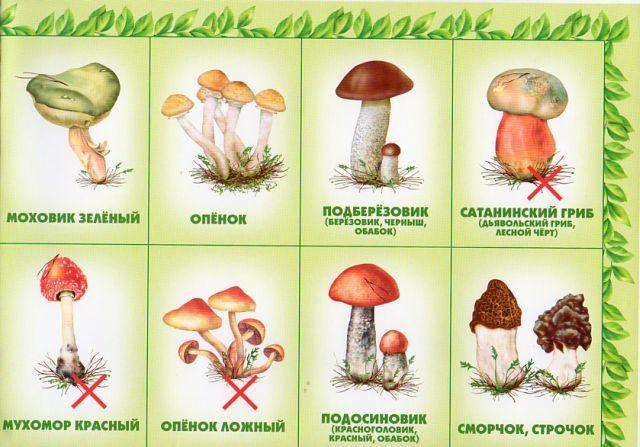 совершенная машина картинки ядовитых грибов и ягод с названиями название
